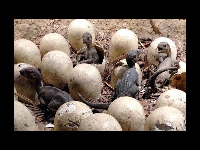 Сенсационная находка шокировала весь мир Обнаружены яйца древних динозавров которым миллионы лет