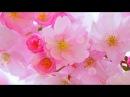 Весенний позитив. Красивый фон для ваших видео и слайдшоу