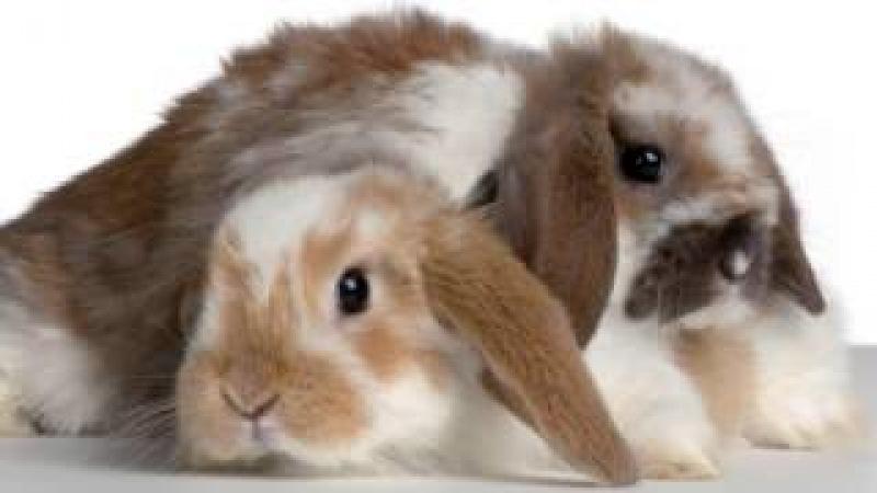 Zwierzęta domowe - film dla dzieci