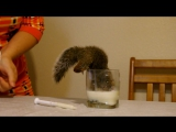 Белки тоже любят молоко