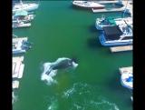 Кит заплыл в марину с яхтами