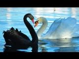Вероника Агапова - Птица-день, птица-ночь