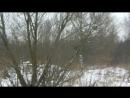Зимняя прогулка. Мики и вороны