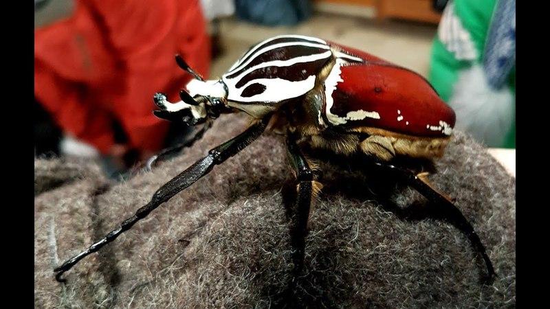 Всякое с энтомологической выставки ярмарки Бабочки Много яркого и жуковидного
