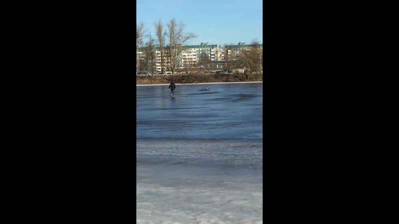 Торчи потестили лёд