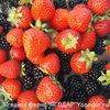 """Ягодная ферма """"ЯГОДАР"""" челны ягоды, рассада..."""