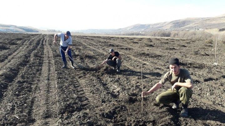 Огромный фундуковый сад появится в Карачаево-Черкесии