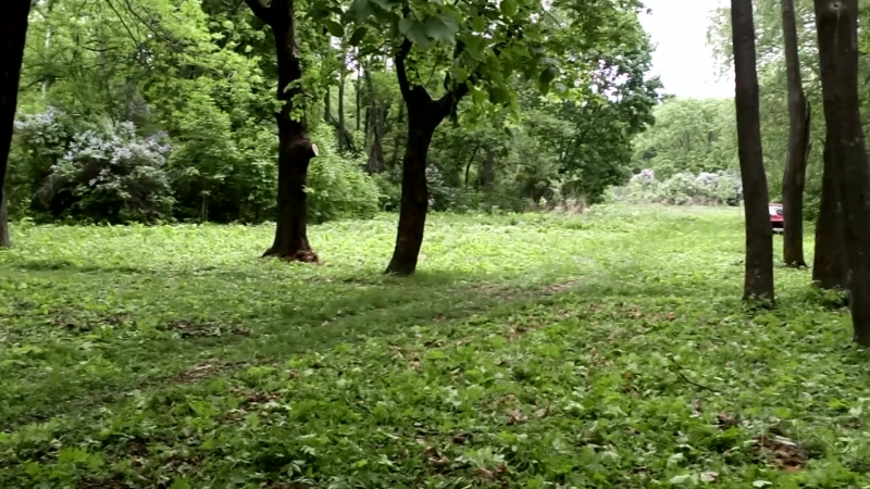 Субботник в парке Орловых Давыдовых, силами жкх, техникума, и коллектива администрации поселения.