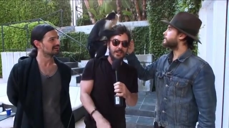 Jared, Shannon, Tomo and Ripley