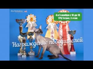 """Выставка кошек в ТРЦ """"Тетрис"""""""