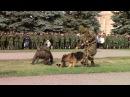 Как служебные собаки задерживают диверсантов