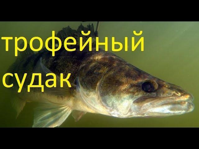 зимняя рыбалка на трофейного судака Обское море