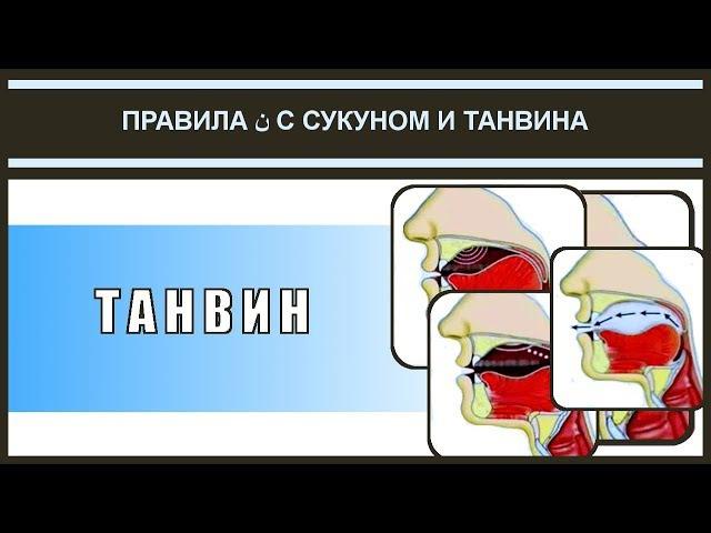 Айман Сувейд. 4. Правила нун с сукуном: ТАНВИН (с субтитрами на русском)