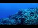 Тайны планеты Земля 03 серия. Азорские острова. Акулы, киты, манты / Secrets of the Earth (2013)