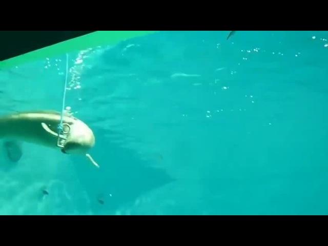 Kittiwake Smoker Underwater