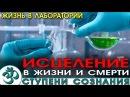 Жизнь в лаборатории NikОsho