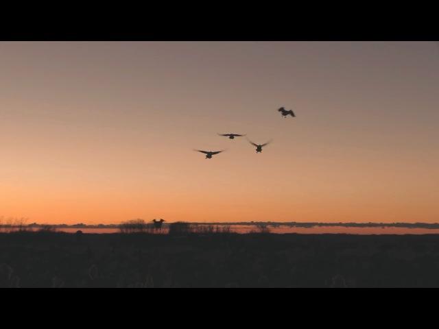 Охота на гусей с профилями Красивые налеты