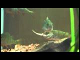 Жизнь в аквариуме