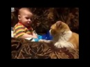 Заботливый кот укладывает ребенка спать Кошки няни для детей