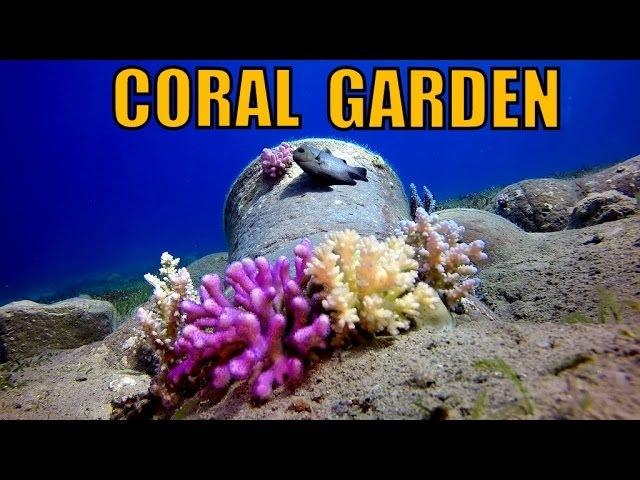 GOPRO 4 EGYPT DAHAB DIVING Coral Garden