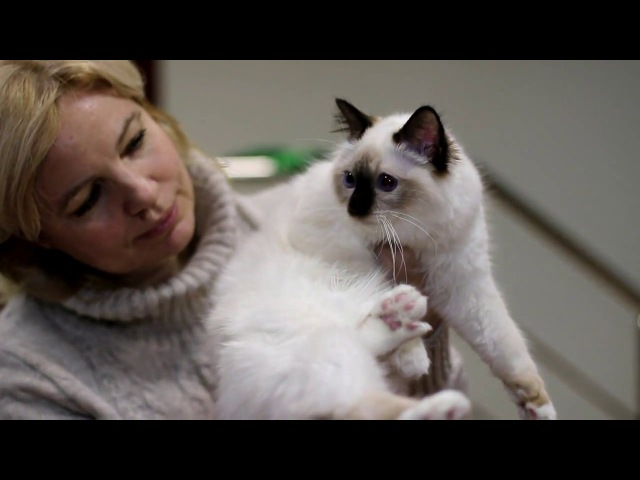 Прием в проф. клубах кошек PCA 13.01.2018г