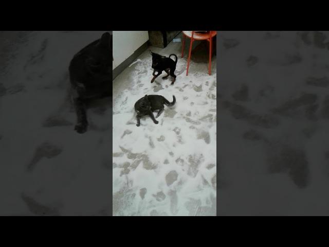 Джакузи для кота... Покойся с миром подушка антистресс 😂( Приколы про котов; Прик...