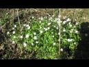 Брянские короткометражки. Улыбка весны