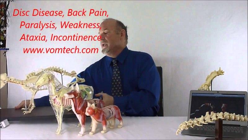 Лечение дископатии, спинальной боли, параличей, парезов, атаксии, слабости тазовых конечностей и недержаний с помощью физиотерапии Disc Disease, Back Pain, Paralysis, Paresis, Rear Leg Weakness, Incontinence