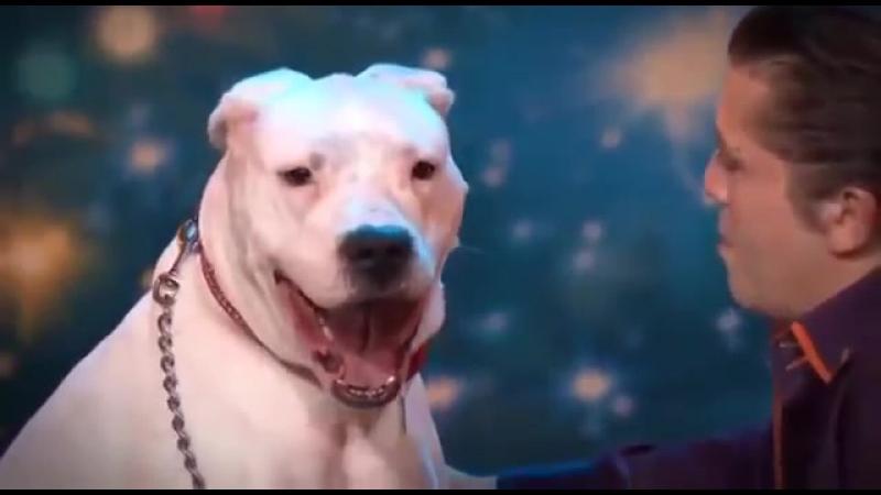 Собака подпевает песни Уитни Хьюстон