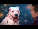 Собака подпевает песни Уитни Хьюстон ...