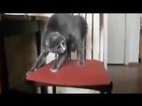 Приколы! подборка СМЕШНОГО видео котов! 20 мин Угара! подборка 2014 Funny Cats C
