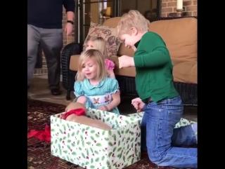 Собака в подарок на Рождество