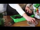 Посадка перца на рассаду 3 самых лучших способа рассада перца выращивание