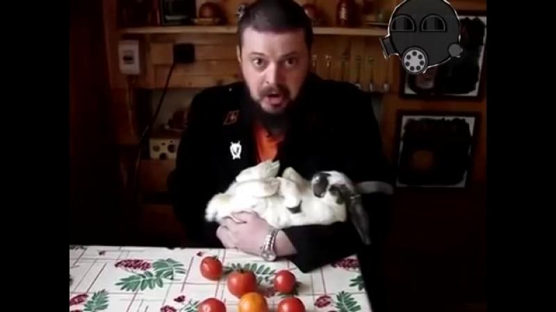 Виктор Пузо - На блюде (микс)