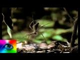 Паук кидает паутину