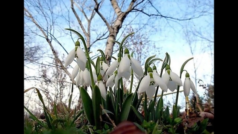 ПРОБУЖДЕНИЕ....или всё начинается с Весны...
