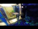 Подводный мир Мадагаскара барбусы Glo