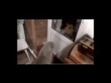 Кот четко говорит - открой дверь!