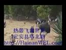 Парк экзотических тропических птиц на острове Хайнань возле Хайкоу, Китай, адрес на карте, как добраться самостоятельно - экскур