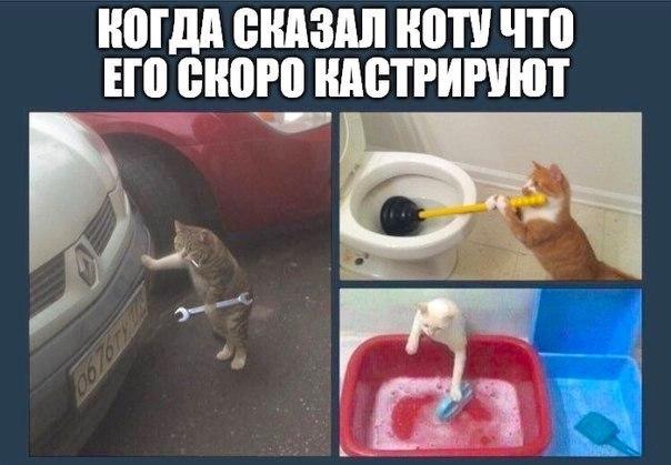 https://pp.userapi.com/c840432/v840432750/20a90/mx47hJQPcqg.jpg