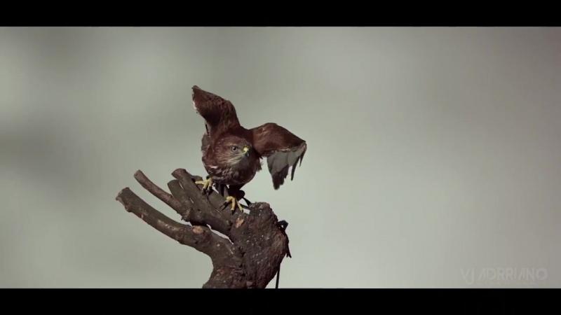 Havana - Vita Bella (Hudson Leite Thaellysson Pablo Remix) VJ Adrriano Video ReEdit