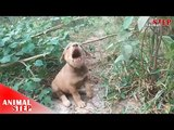 Little Injured Puppy Wont Allow Rescuers to Help But Finally True Love Happens