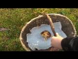 Как мы ездили по грибы