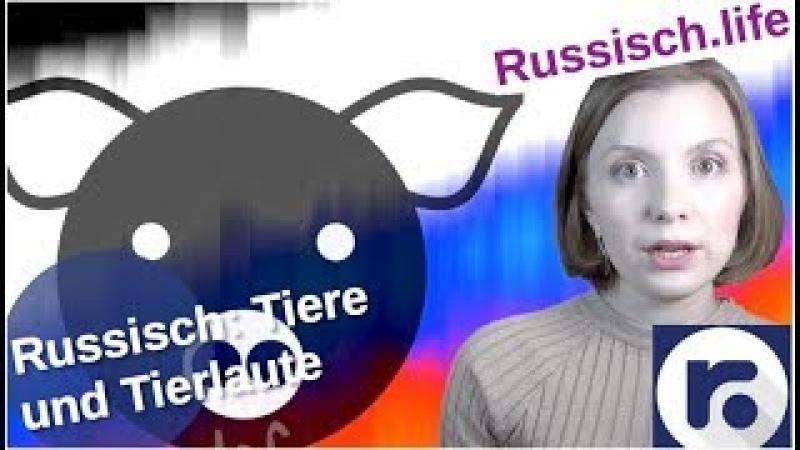 Russisch: Tiere und wie sie machen