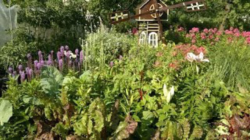 Огород смешанные посадки.Советы огородникам.
