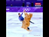 Zarathustra the Figure Skating Cat is the Olympics champion!