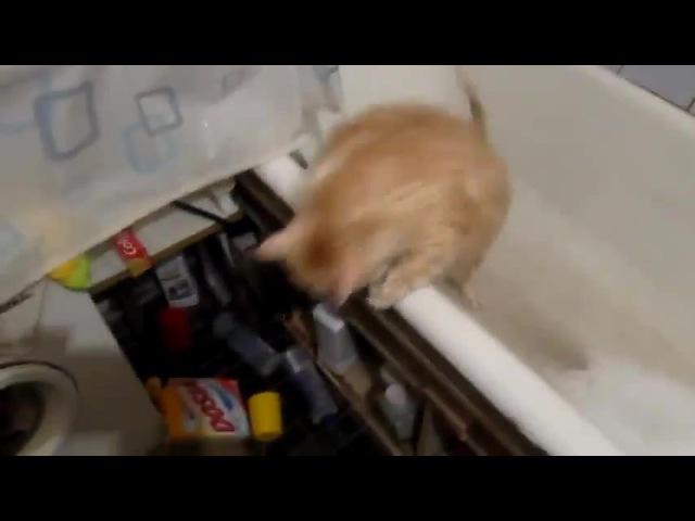 Lowrider cat