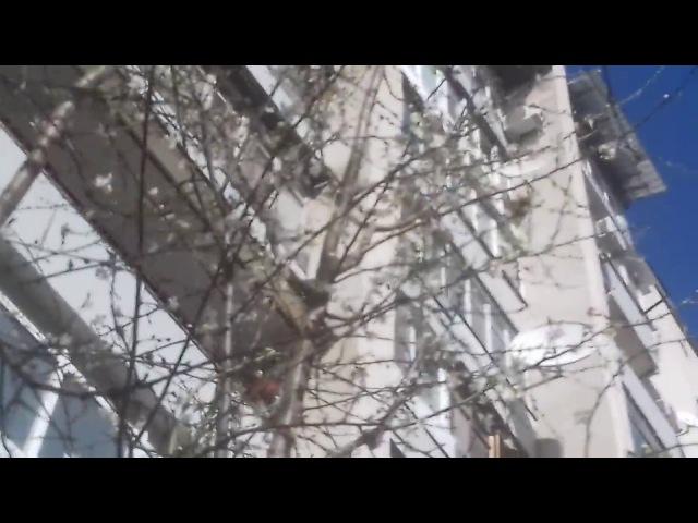 Симферополь Крым весна2018 Сегодня погода солнечная только распускаться цветы и почки на деревьях весна 13марта2018 » Freewka.com - Смотреть онлайн в хорощем качестве