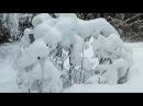 Как найти зимой место для копа в лесу