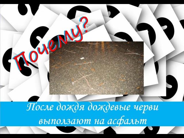 Познавательные ответы: Почему во время дождя черви выползают на асфальт? 1